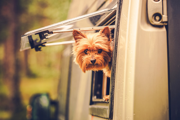 dog in a rv